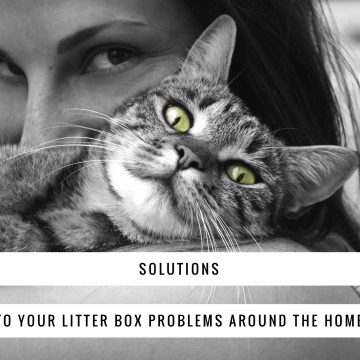 Solutions to Your Litter Box Problems Around the Home