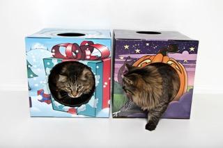 Kitty Cardboar