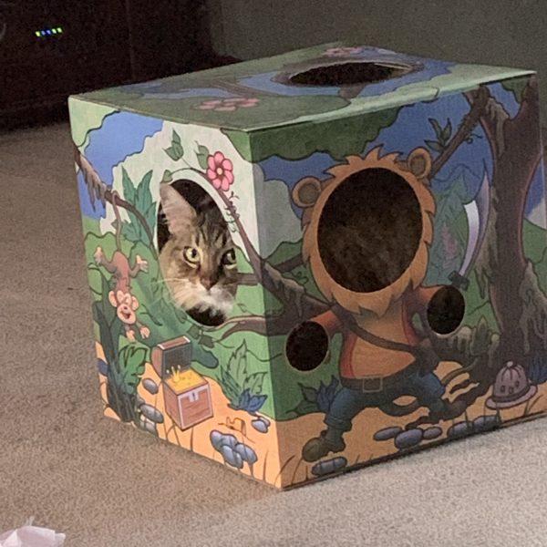 Kitty Cardboard
